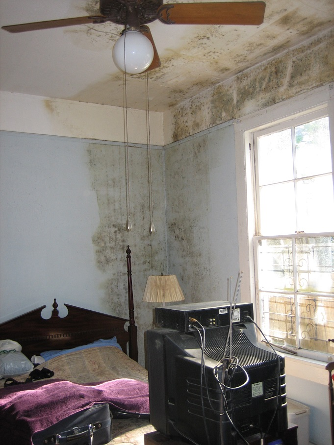 room with mold on walls and ceiling.