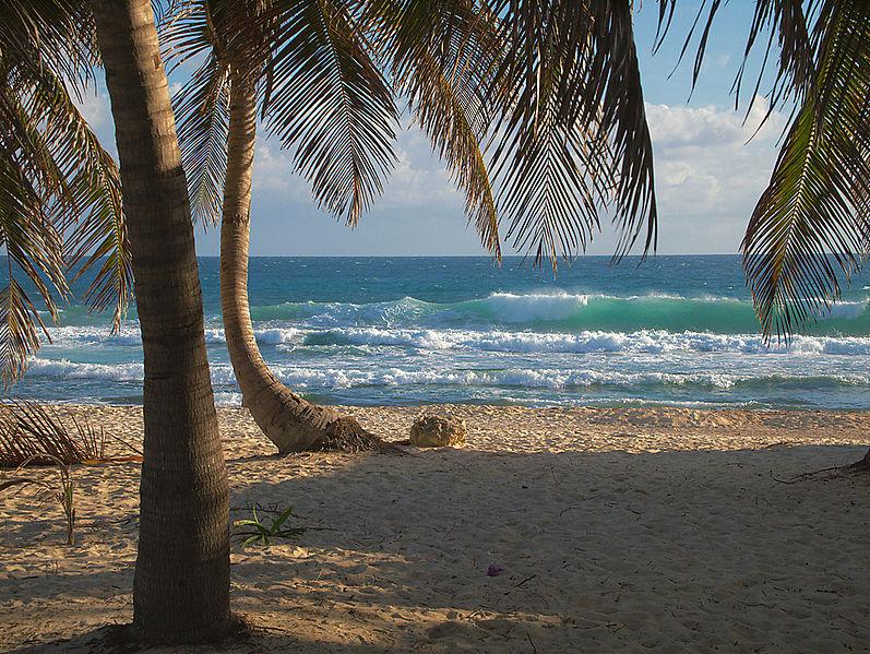caribbean beach with coconut trees